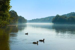 Ducks1700
