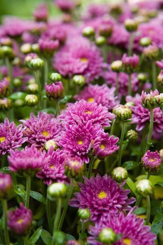 Flowers2377
