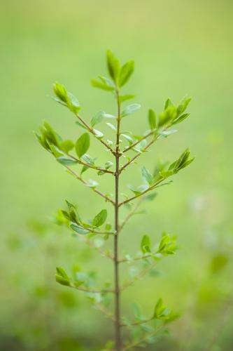 TreeSeedling